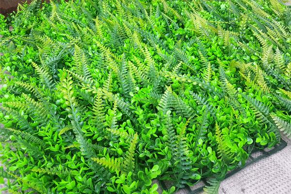 cỏ dương xỉ